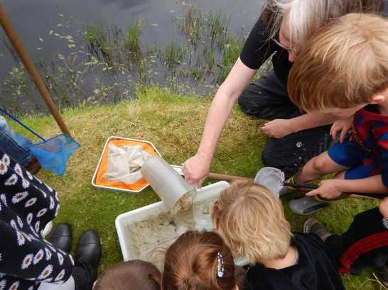 Pond dipping is a great Freelance Ranger Activity, there are always so many creatures to find